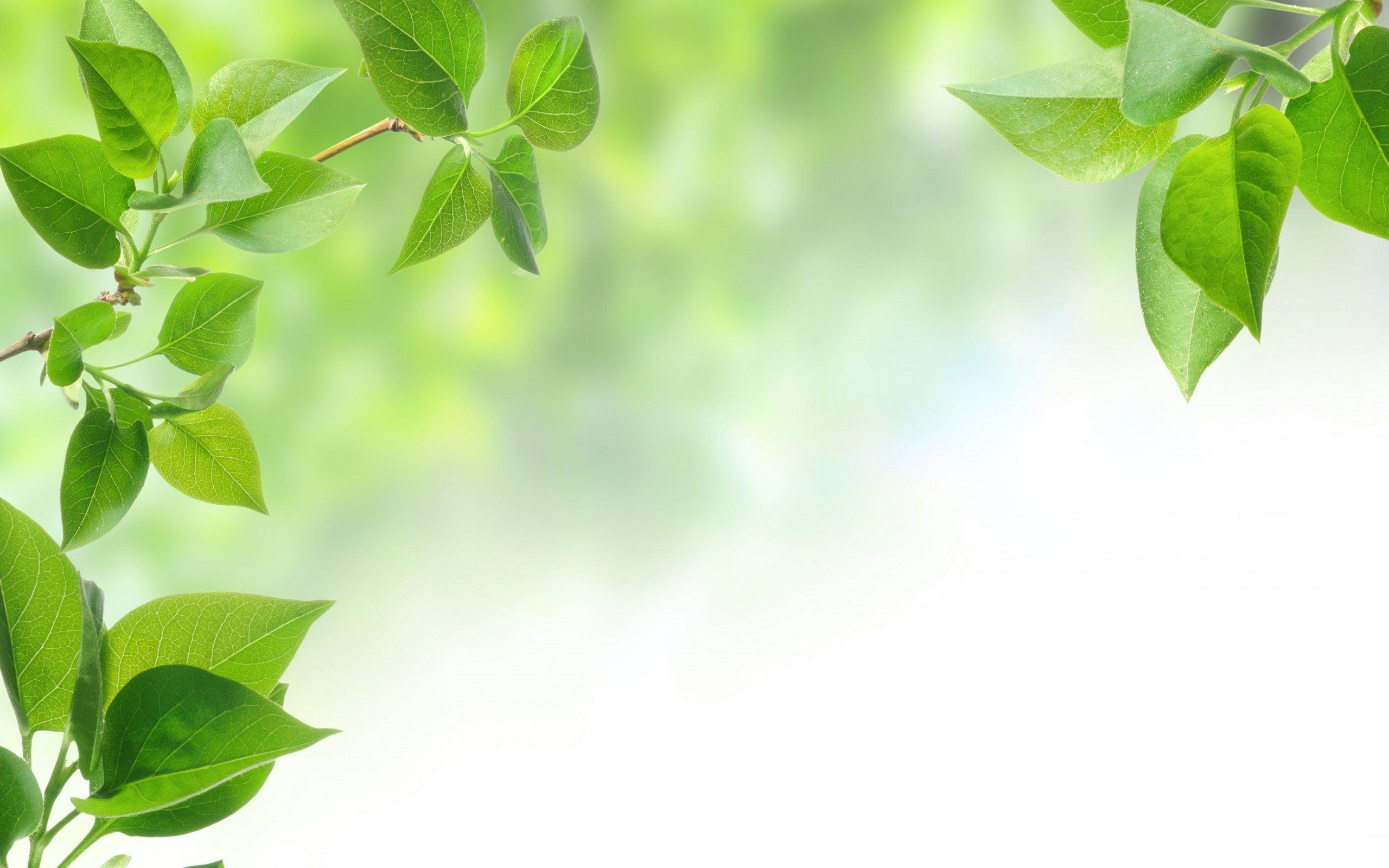 природа ветка листья nature branch leaves  № 2258 загрузить