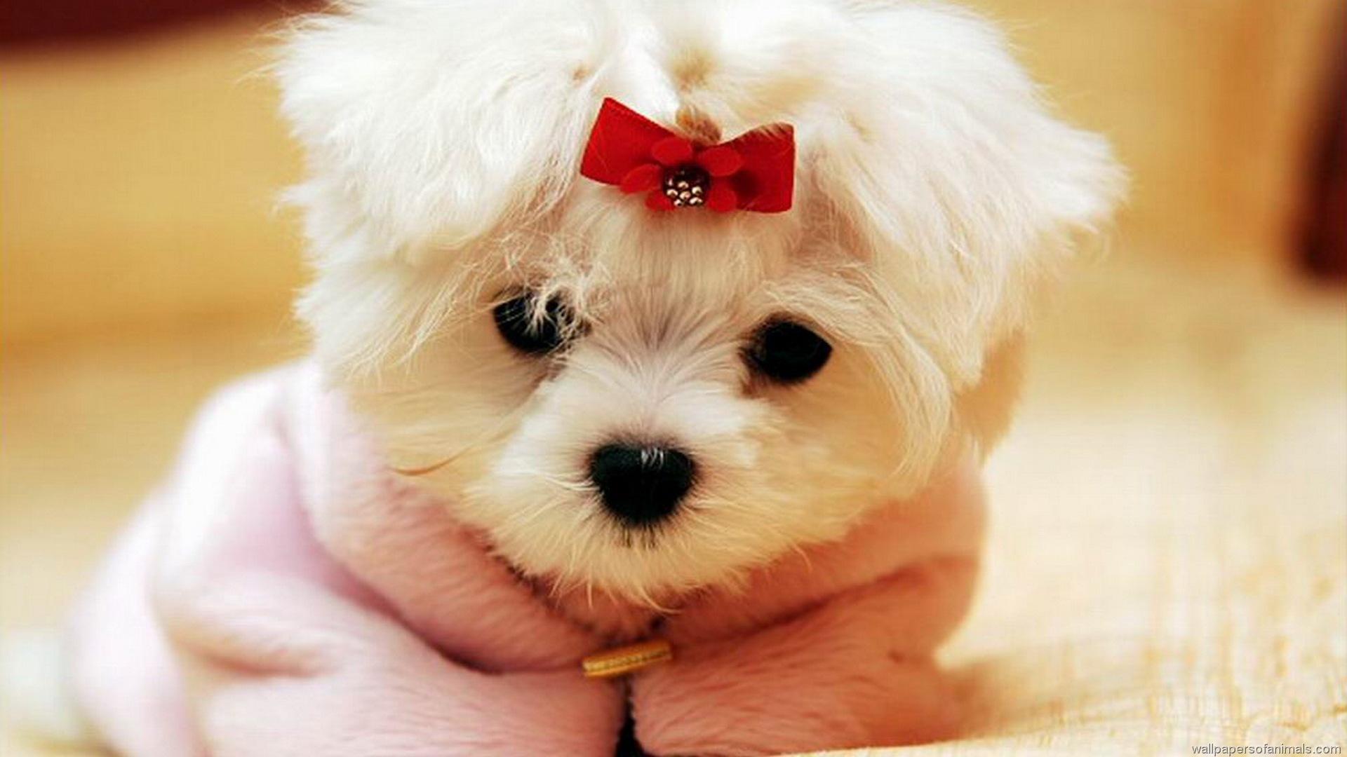 little dogs 9197