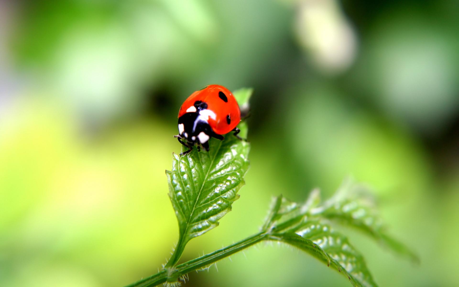 lovely ladybird wallpaper 44221
