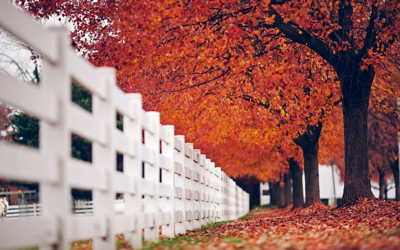 lovely white fence wallpaper 42291