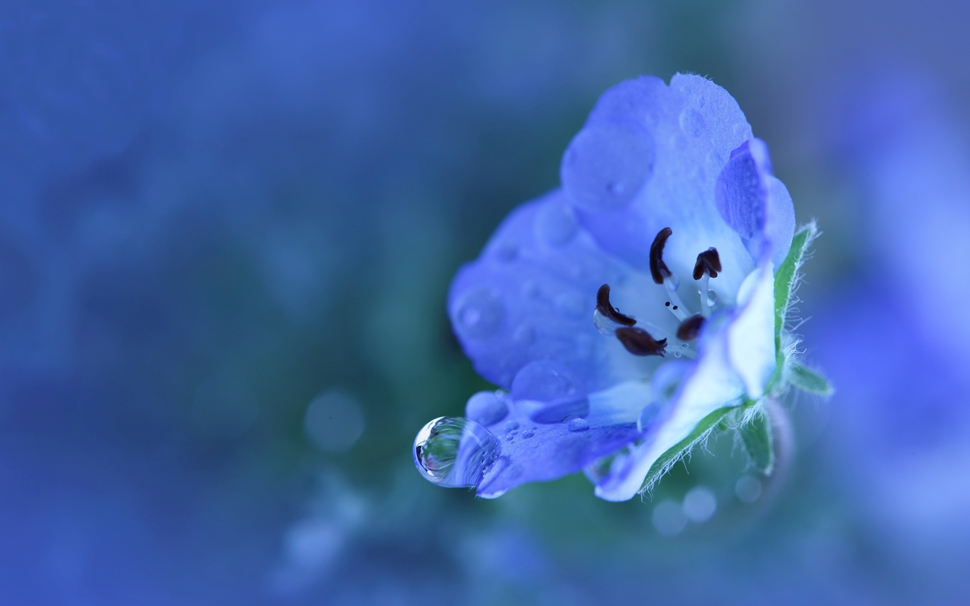 pretty blue flower wallpaper 41045