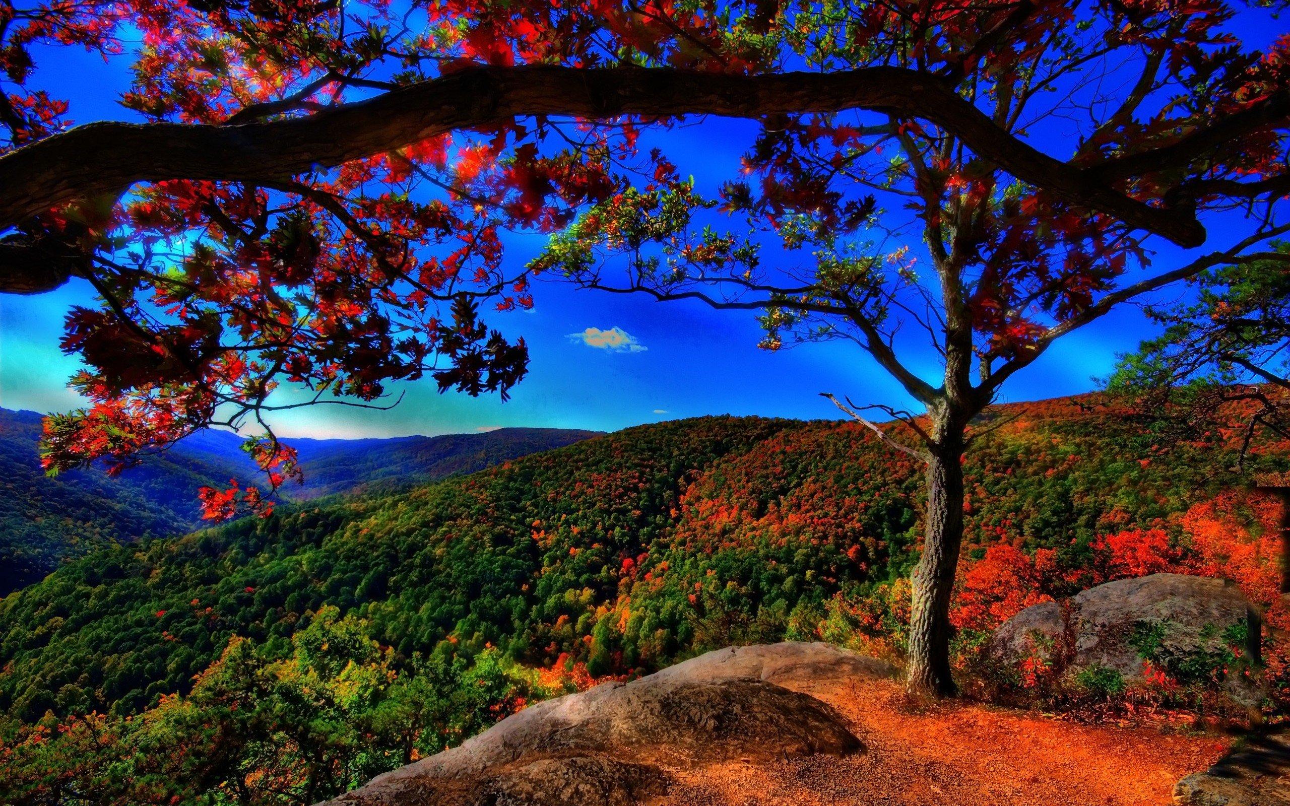 pretty scenery 18754