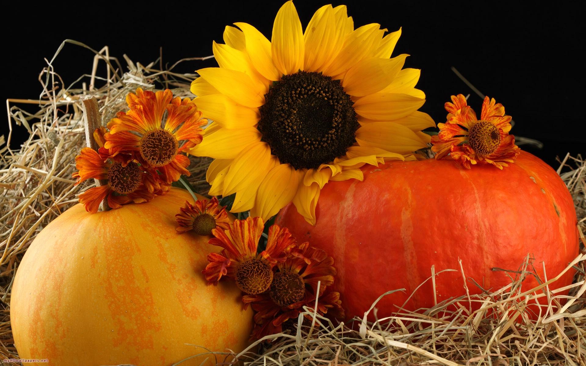 pumpkins 25782