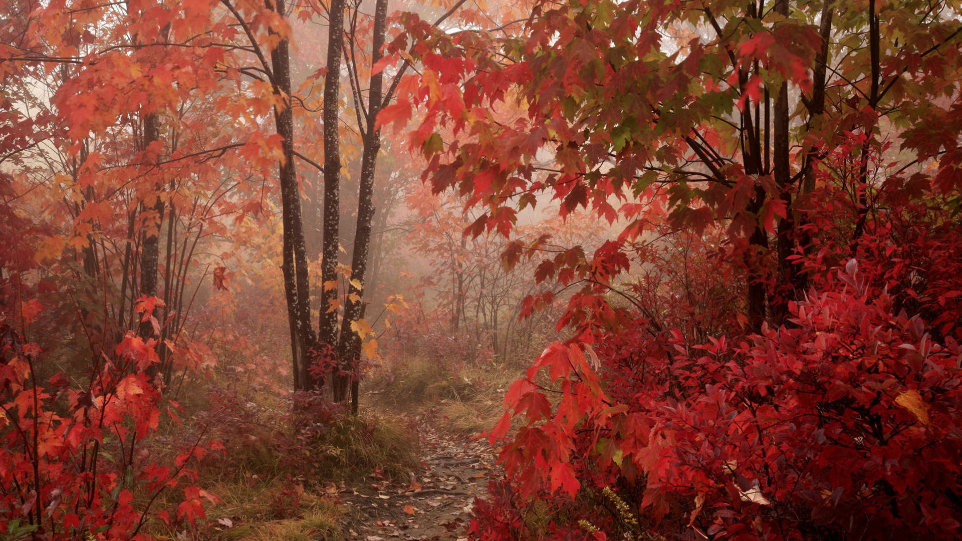 red forest 33535