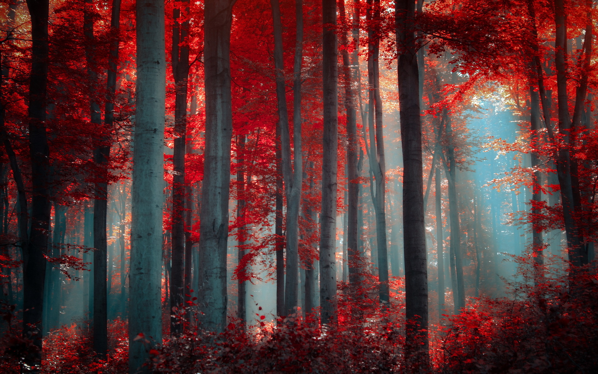 Red forest 33536 1920x1200 px for Light art definition