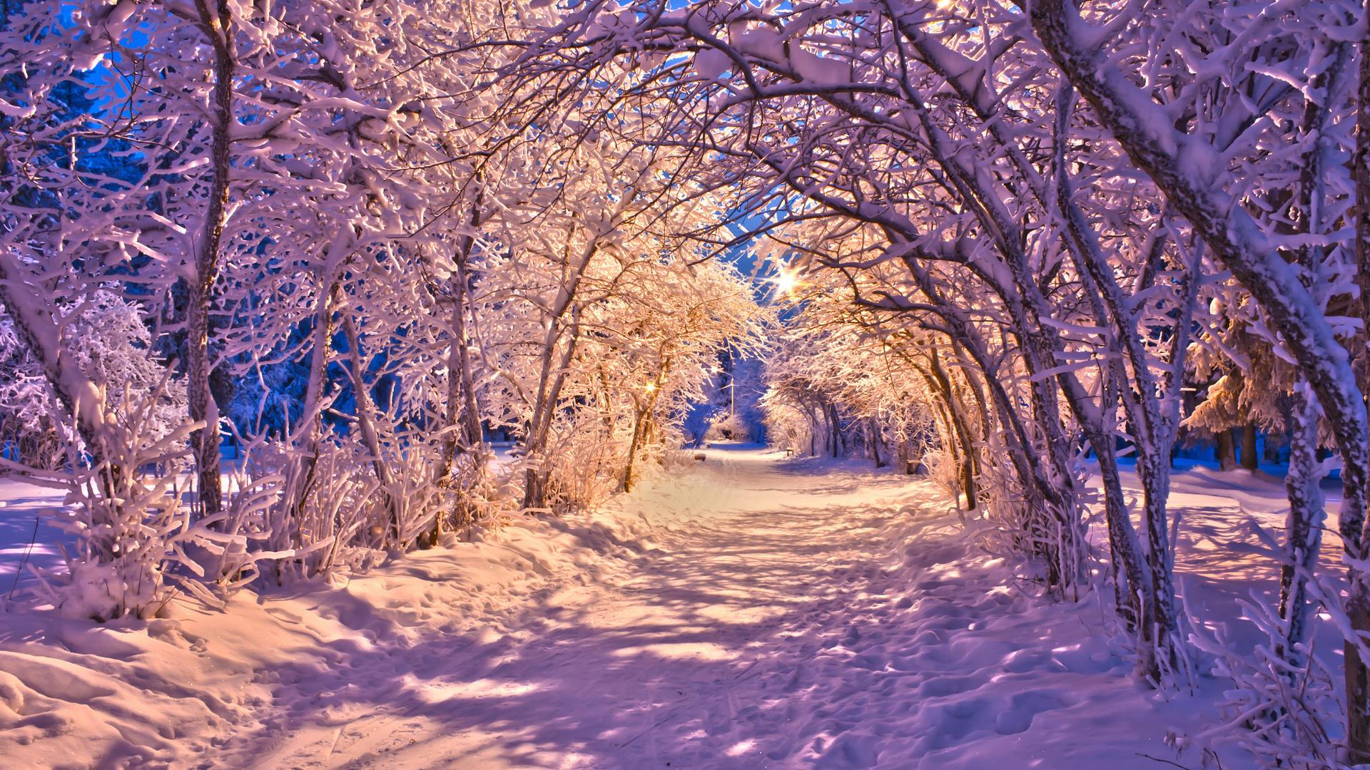 snowy trees 32373