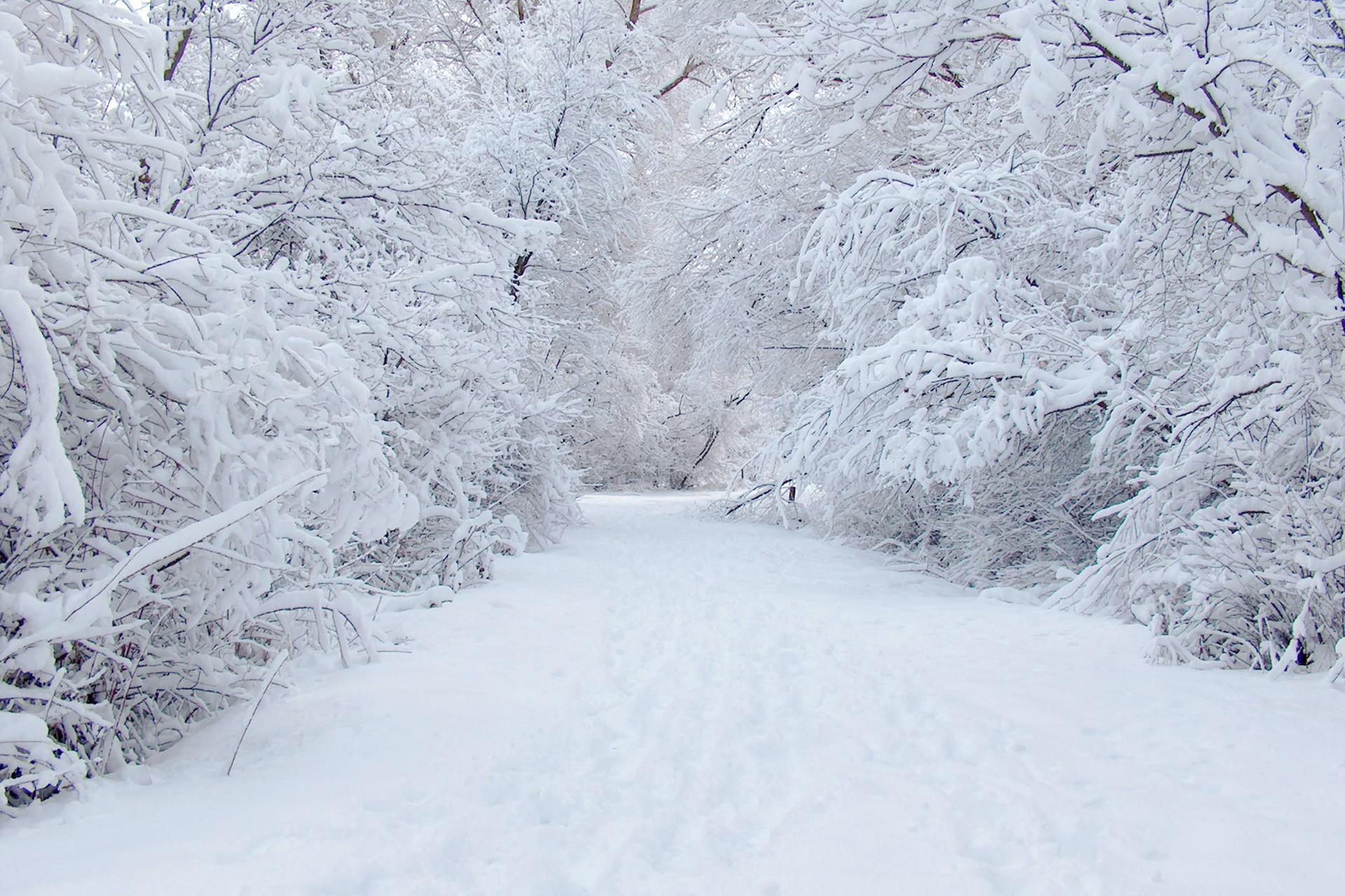 snowy trees wallpaper 32370