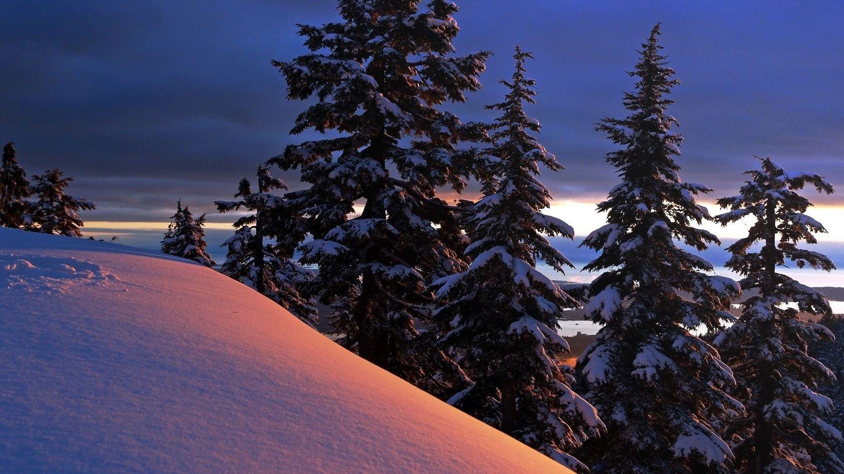 snowy trees wallpaper 32384