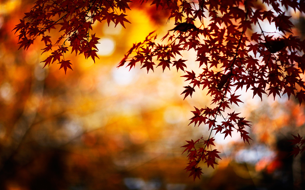 Download stunning fall backgrounds 18185 1280x800 px high - Stunning wallpaper for walls ...