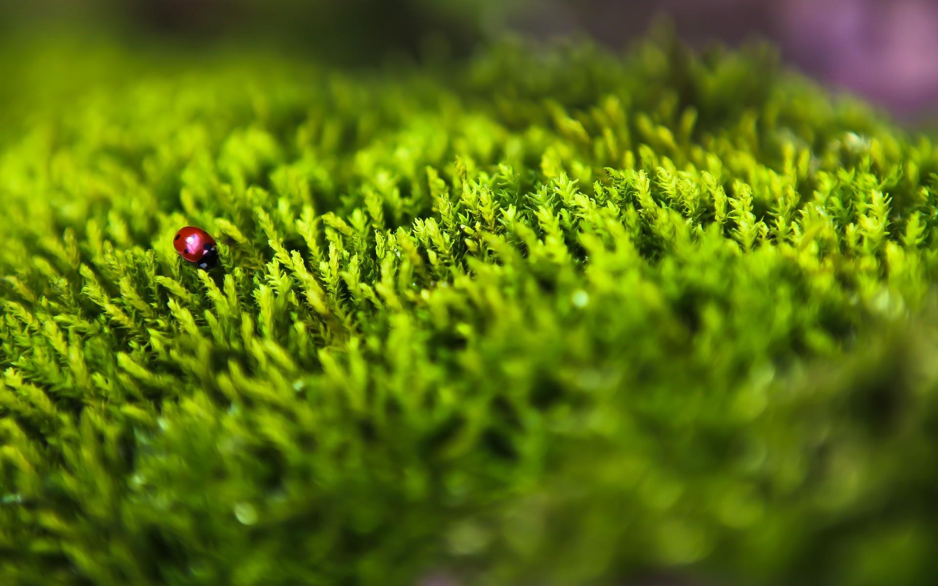 stunning ladybird wallpaper 44224
