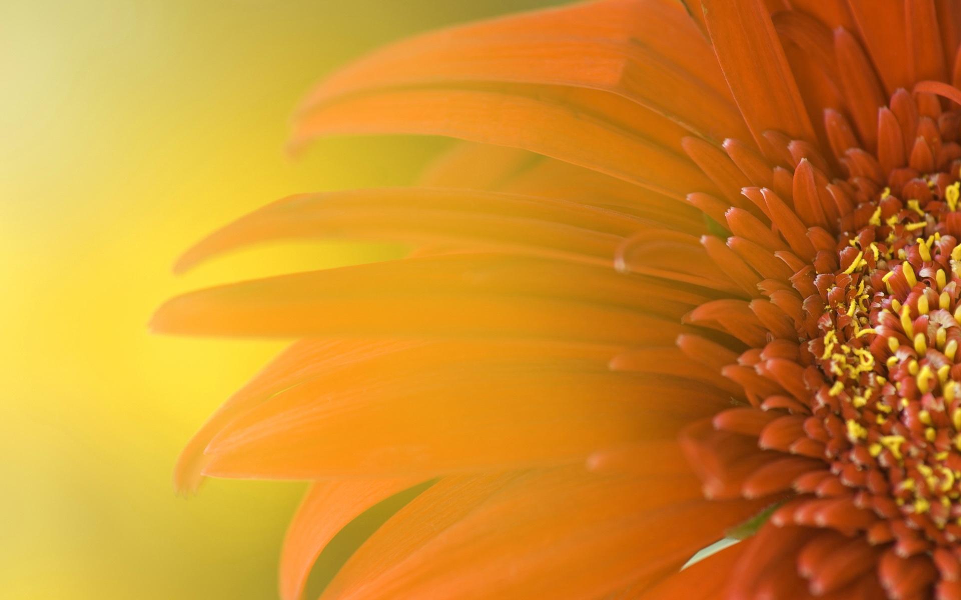 sunflower wallpaper 16073