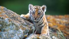 Adorable Wildlife Pictures 30806