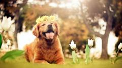 Amazing Dog Mood Wallpaper 43347