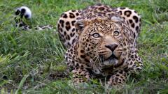 Amazing Wildlife Wallpaper 30795