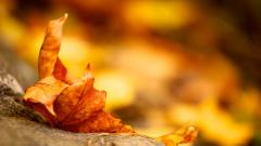 Autumn Leaves Background 20792
