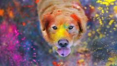 Awesome Dog Mood Wallpaper 43346