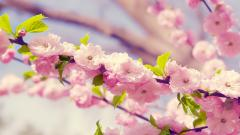 Awesome Flower Backgrounds 18216