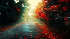 Beautiful Fall Backgrounds 18183