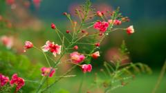 Beautiful Flower Pictures 26783