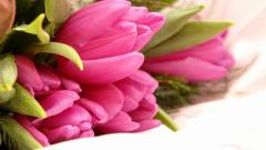 Beautiful Flowers Pictures 26788