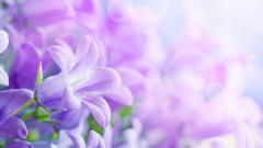 Beautiful Flowers Pictures 26794