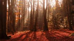 Beautiful Red Forest Wallpaper 33533