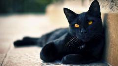 Black Cat Wallpaper 24152
