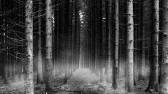 Black Forest Wallpaper 30418