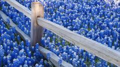 Blue Flowers Wallpaper 41046