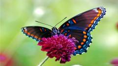 Butterfly 13381