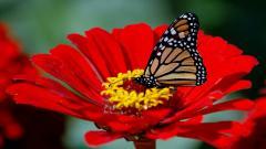 Butterfly 13383