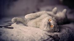 Cats 10819