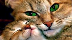 Cats 10822