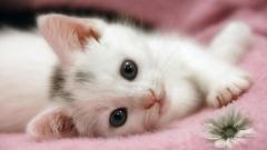 Cats 10827