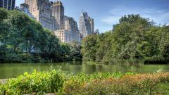 Central Park NYC 22024