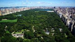 Central Park NYC 22025