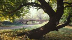 Central Park Wallpaper 22016
