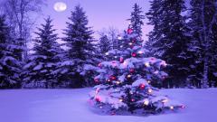 Christmas Scenery 18726