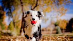 Cute Dog Mood Wallpaper 43337