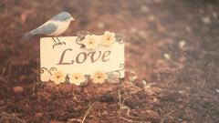 Cute Love Backgrounds 18165