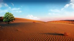 Desert Wallpaper 16484