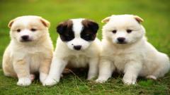 Cute Dogs Computer Wallpaper 10779