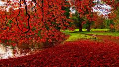 Fall Backgrounds 18173