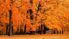 Fall Backgrounds 18179
