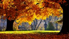 Fall Backgrounds 18184