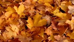 Fall Leaves Background 20802
