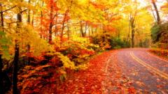 Fall Leaves Background 20803