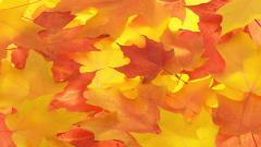 Fall Leaves Background 20804