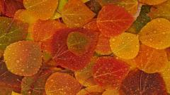 Fall Leaves Background 20806