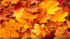 Fall Leaves Background 20807